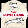 Organizacja imprezy firmowej dla Royal Canin w Krakowie